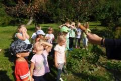 2020-jasien-mali-ogrodnicy-6