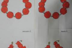 2020-ochronka-pilzno-wiewiorki-6