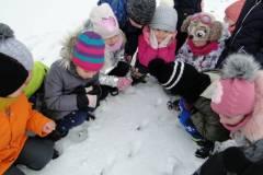 zima-w-naszym-ogrodzie-styczen-2021-6
