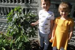 drzewko-figowca-2020-6